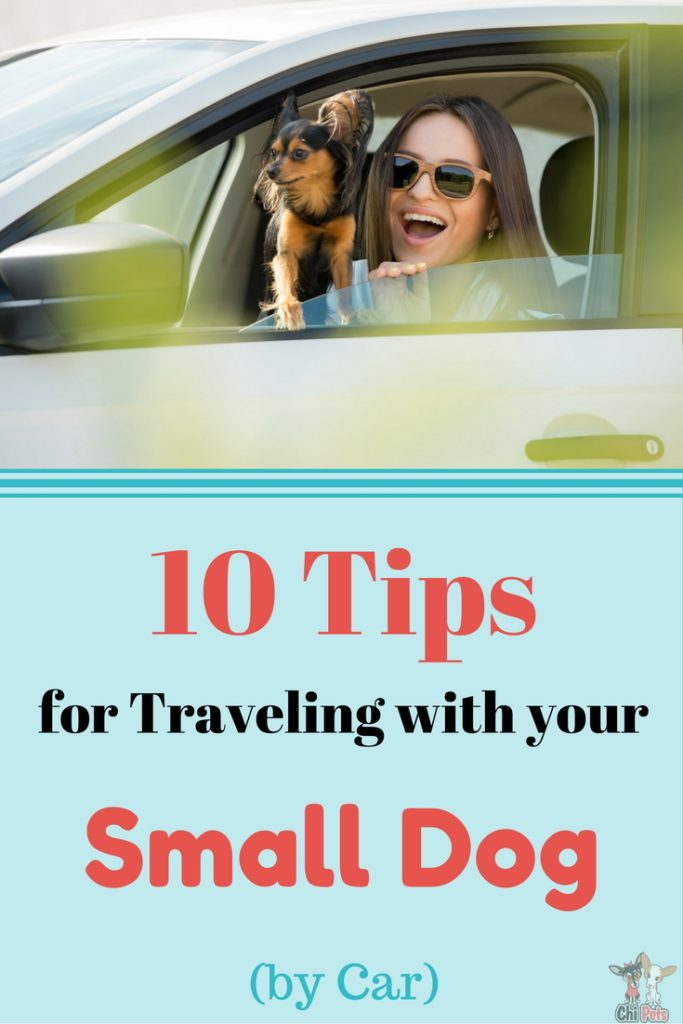 10 Tips to an Epic Road Trip with Your Dog