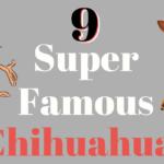 9 Super Famous Chihuahuas (Real & Cartoons) - ChiPets.com