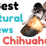 9 Best Natural Chews for Chihuahuas - ChiPets.com
