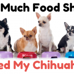 How Much Food Should I Feed My Chihuahua - ChiPets.com