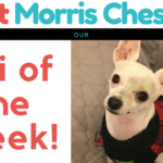 Meet Morris Chestnut our Chi of the Week!