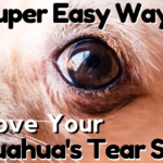 10 Easy Ways to Remove Your Chihuahua's Tear Stains - ChiPets.com