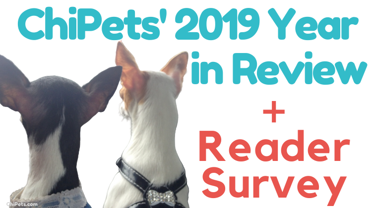 ChiPets 2019 Year in Review
